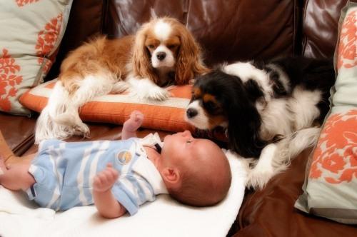 dogs best
