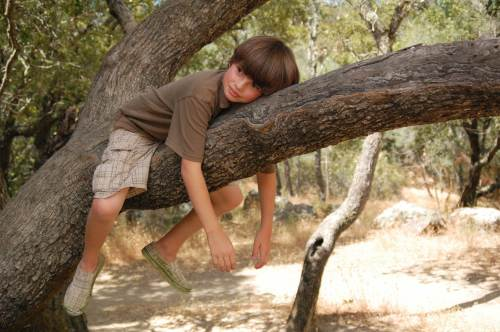 kack-in-tree
